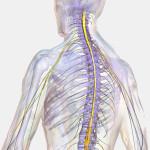 脊髄損傷と後遺障害について